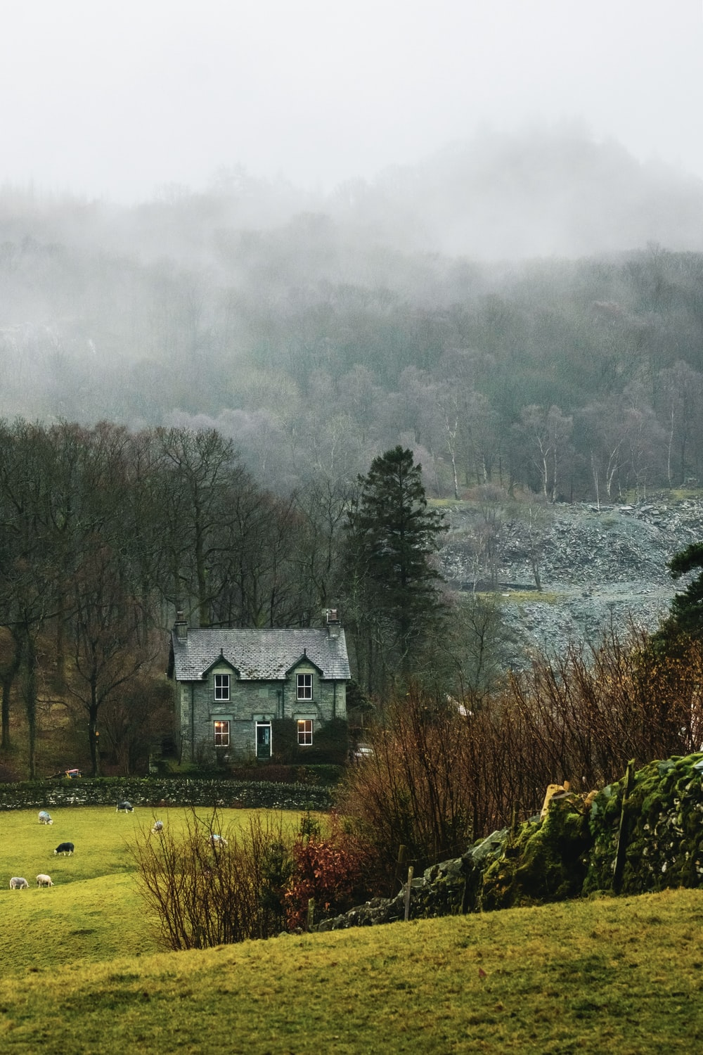 house at forest surrounded with fog