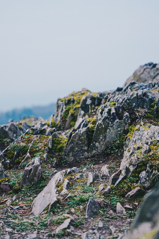 macro photography of rocks during daytime