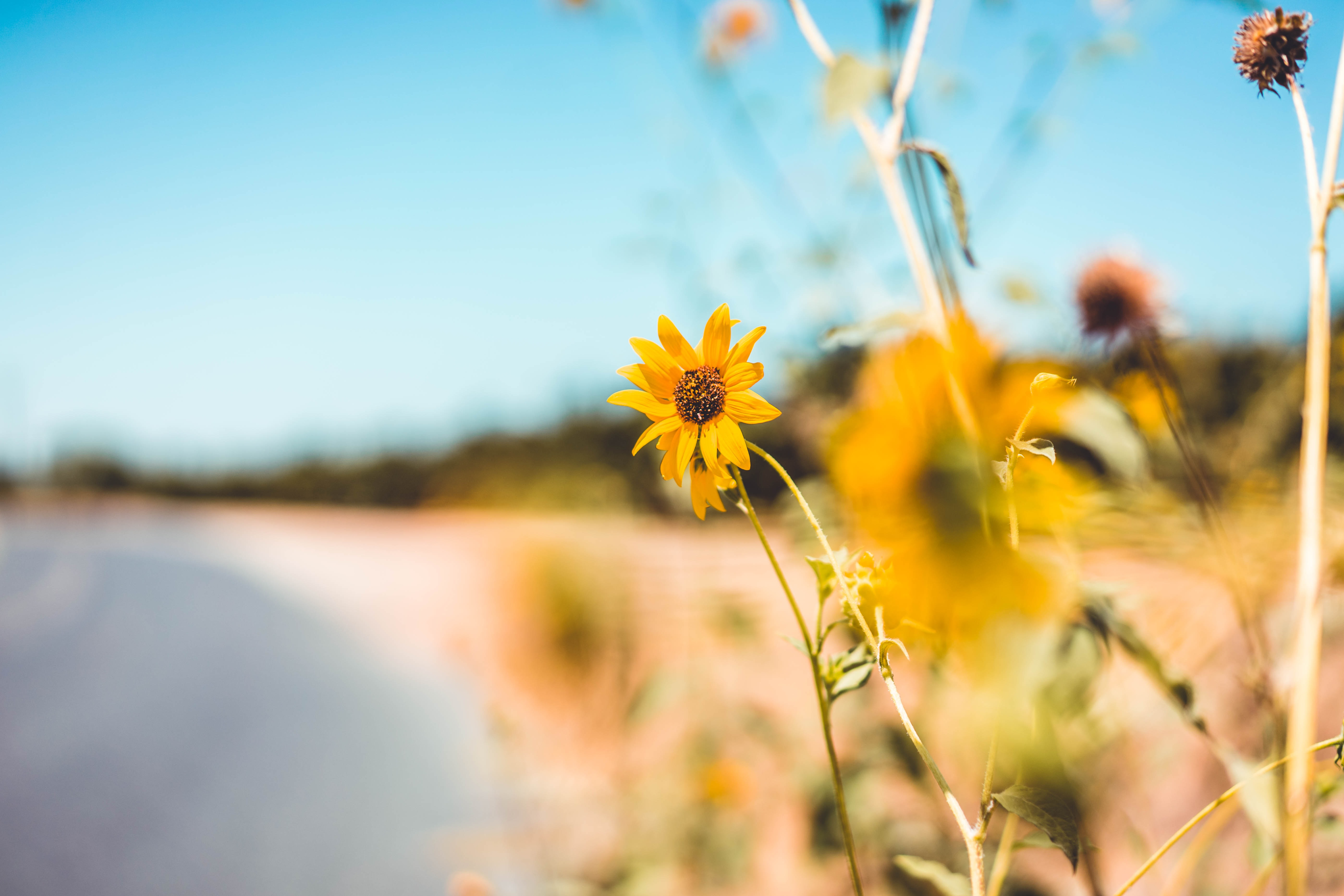 selective focus photography of yellow daisy flower field at shore during daytime