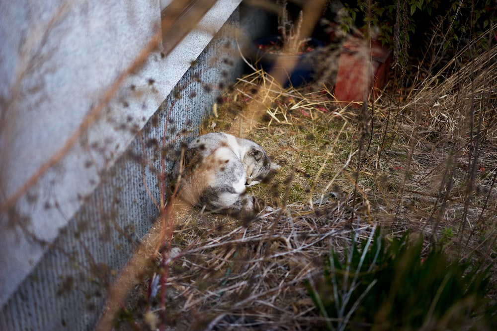 gray cat lying beside wall