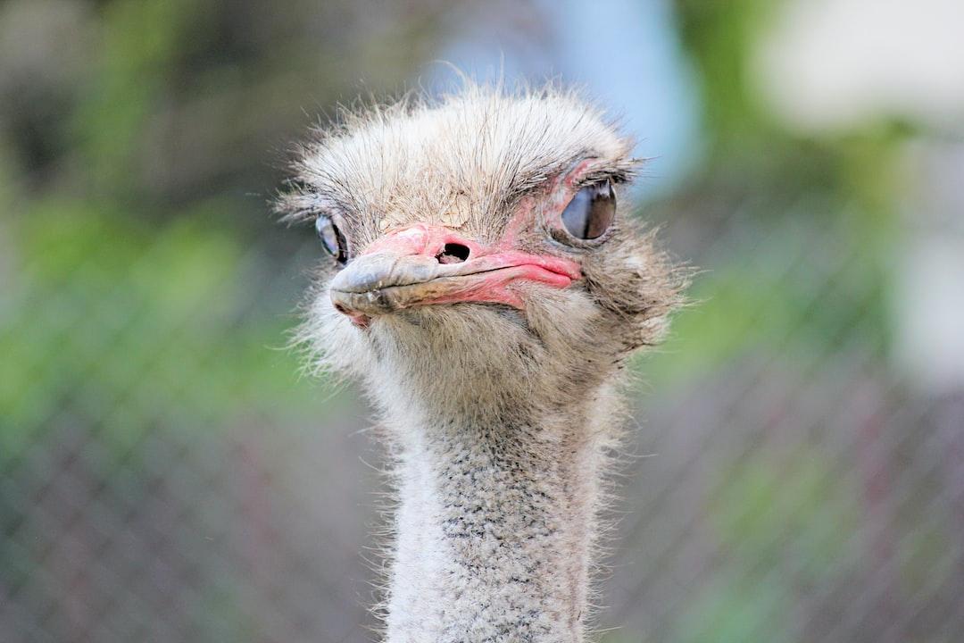 Stringent ostrich