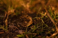 brown frog on green grass in close-up photo