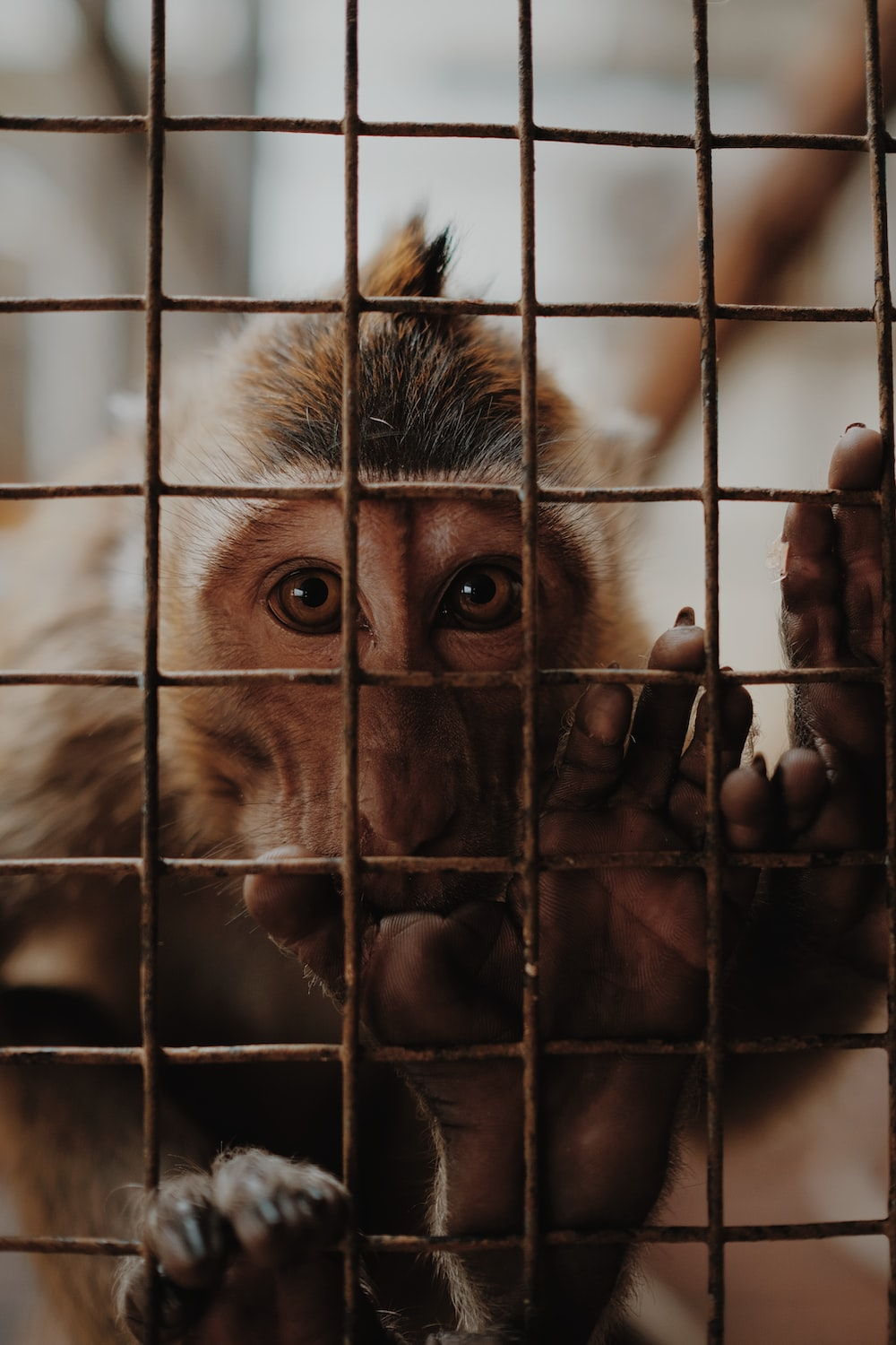 brown monkey inside cage