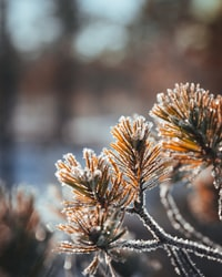 selective focus photography of snow covered tree leaves