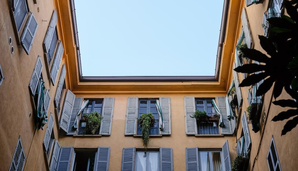 green plants on windows
