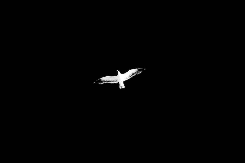 white and black bird flying during nighttime