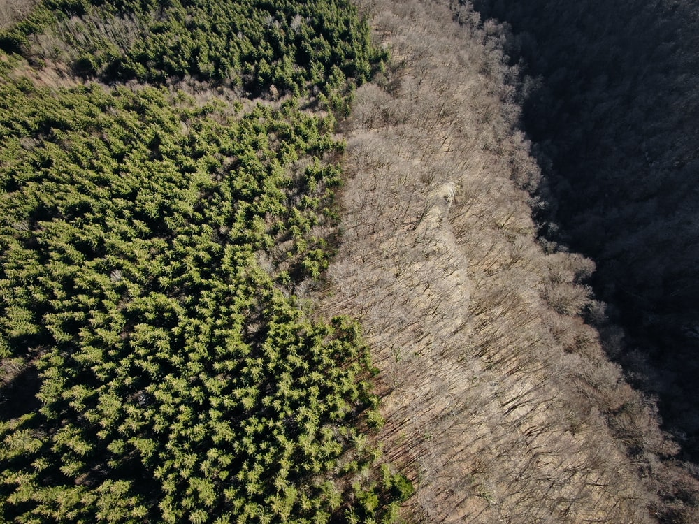aerial photography of trees beside bared trees at daytime