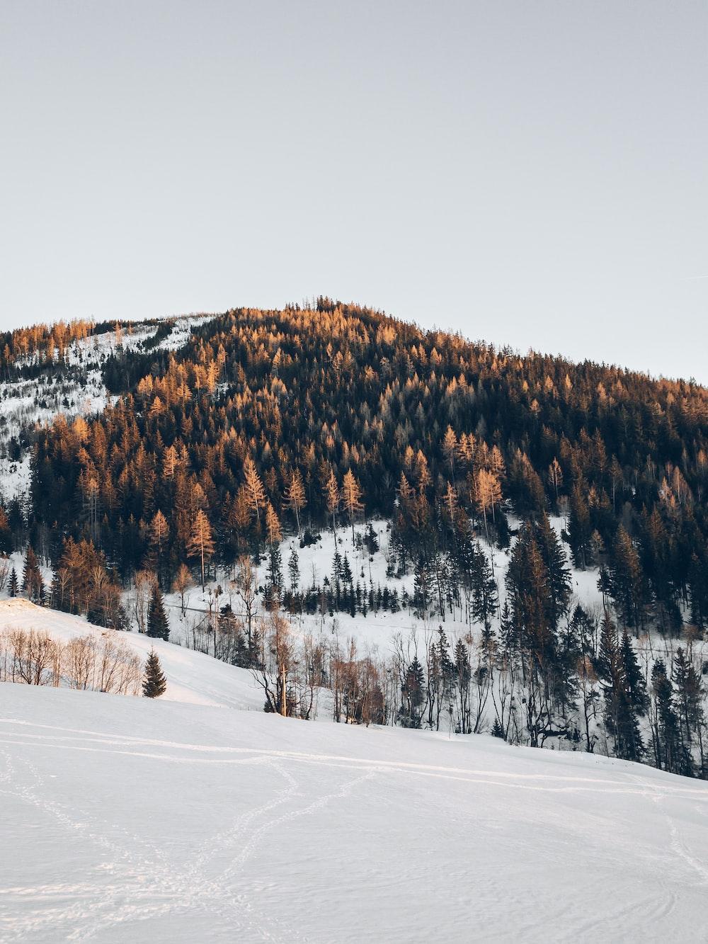 brown trees on mountain