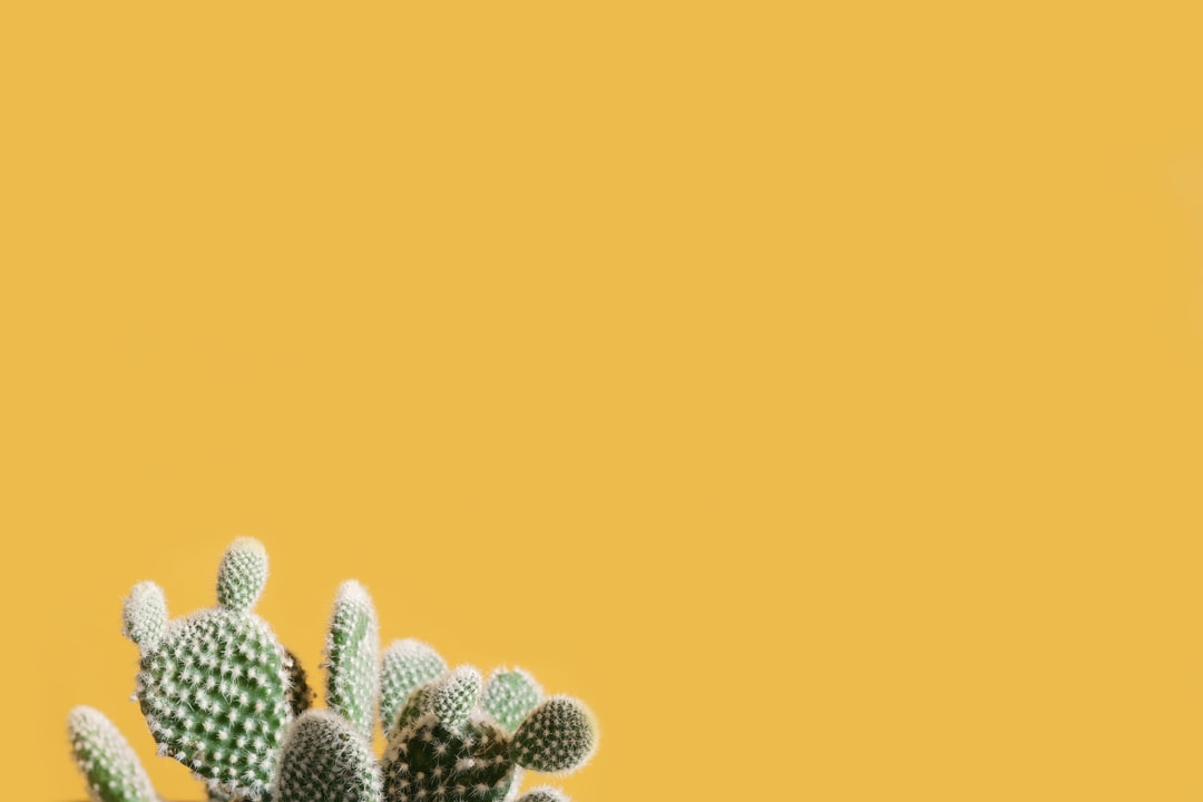 The Hero is the Cacti 🙌🏻🌵 Lots of negative space for you to do your thing!