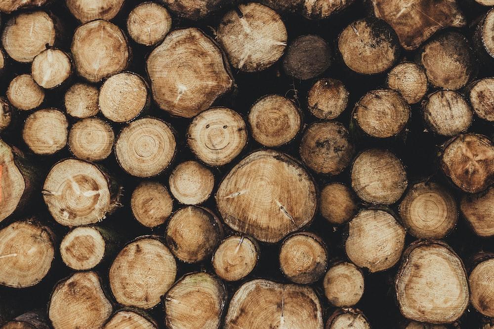 pile of brown tree logs
