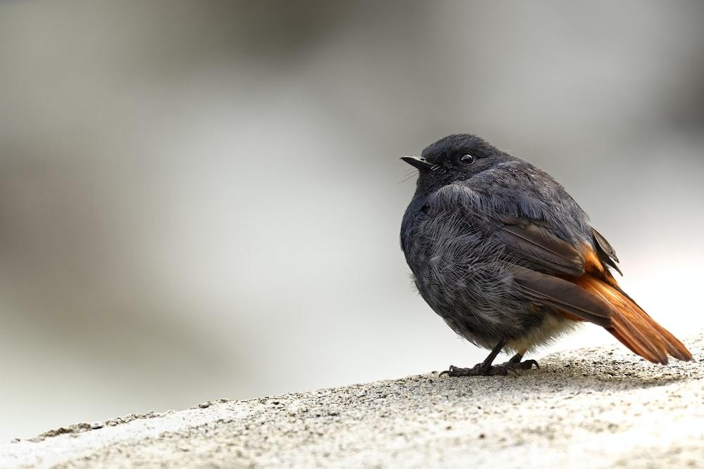 black bird on brown surface