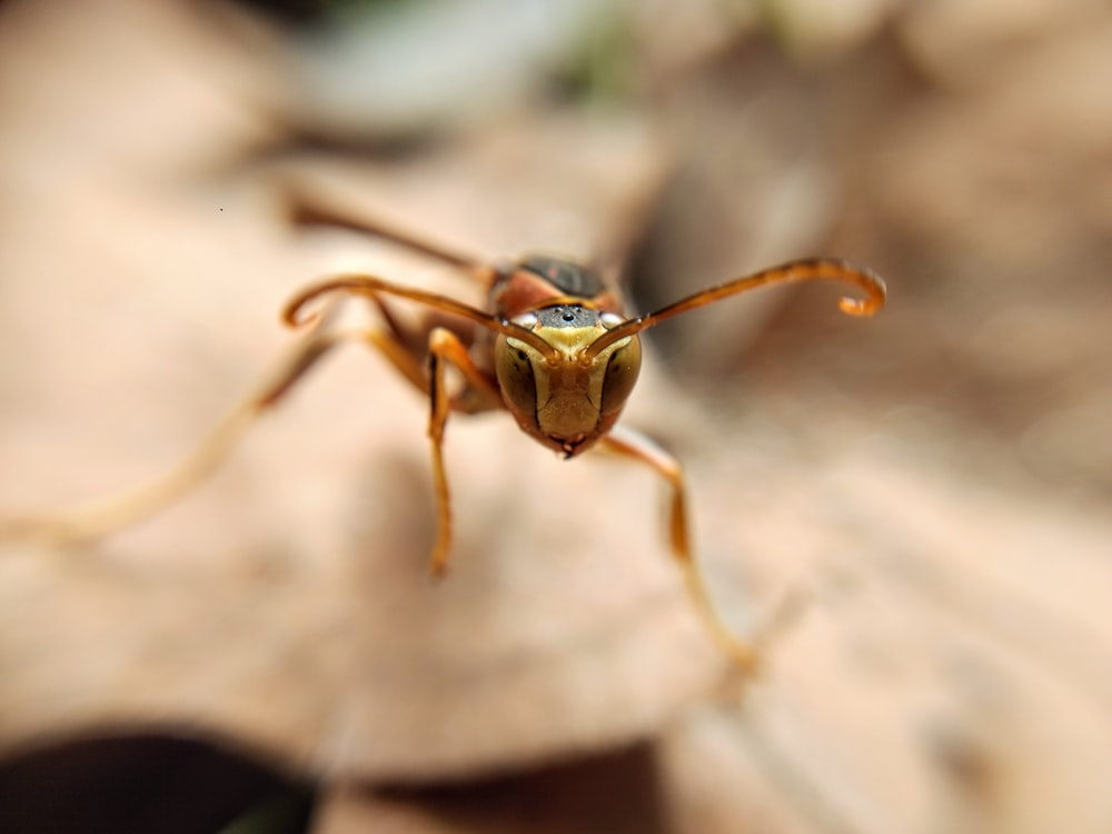 selective focus photography of brown insect