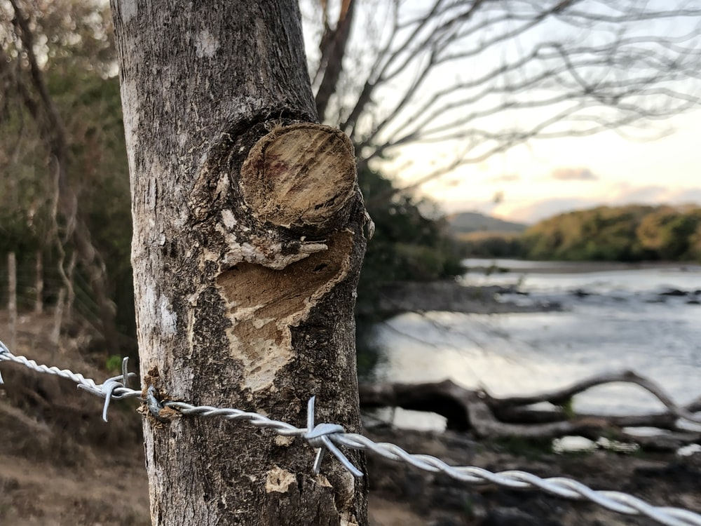 gray barb wire on tree