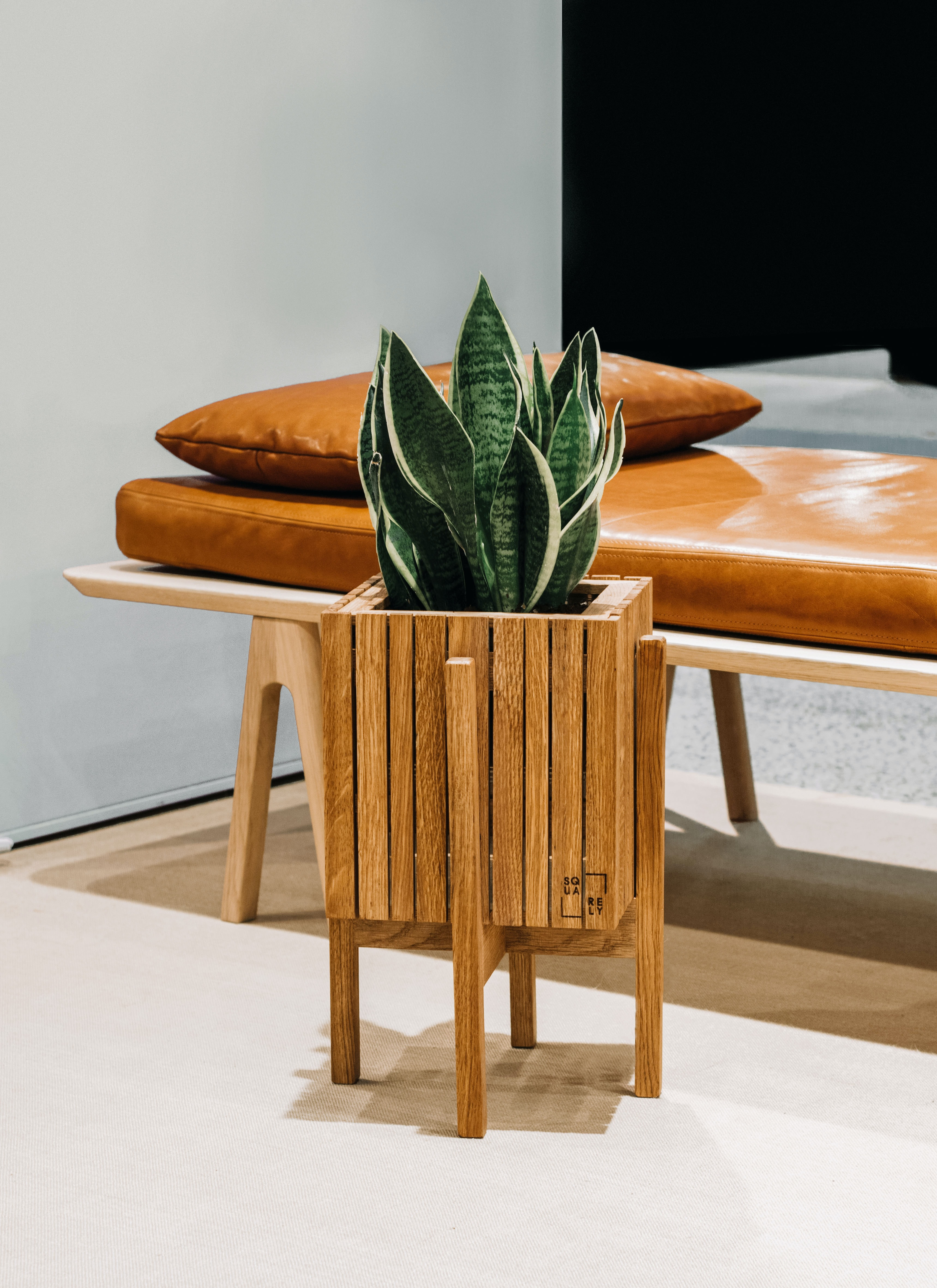 green snake plants on brown wooden pot