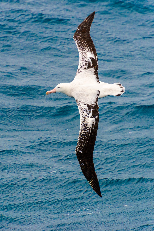 seagull flying above ocean