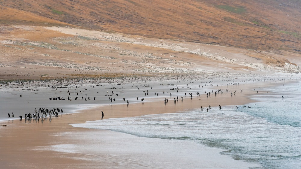 birds on seashore during daytime