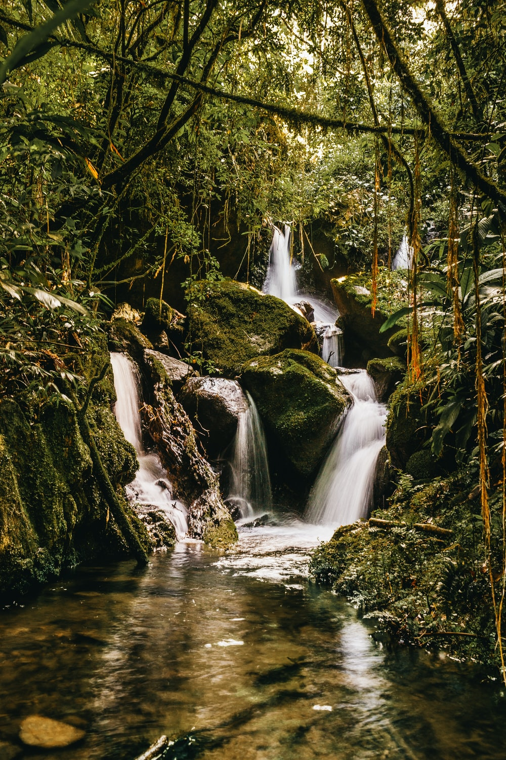 river flowing on forest