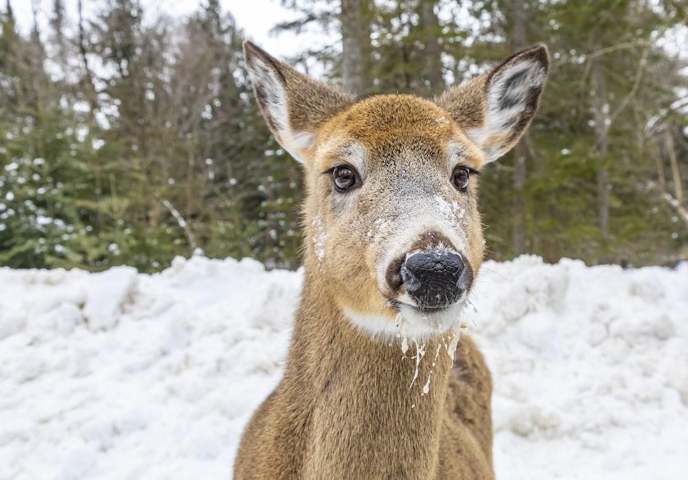 brown deer on snow during daytime