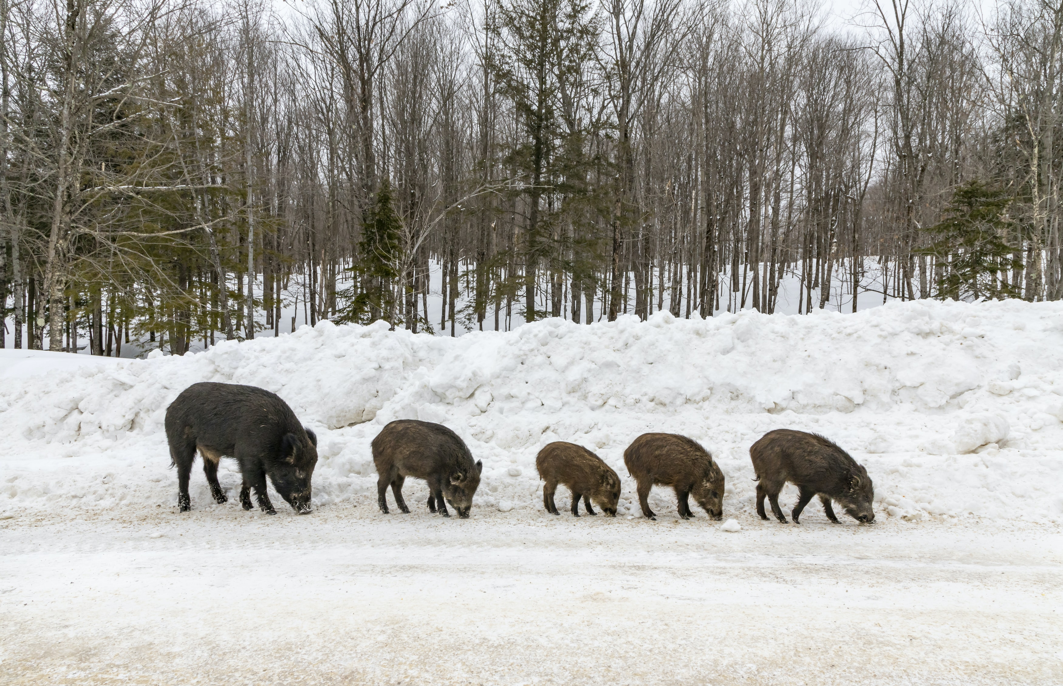 five brown and black animals on snow field during daytime
