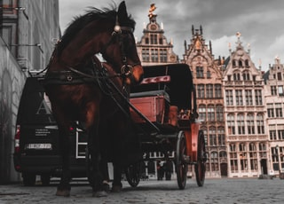 brown horse pulling carriage during daytime