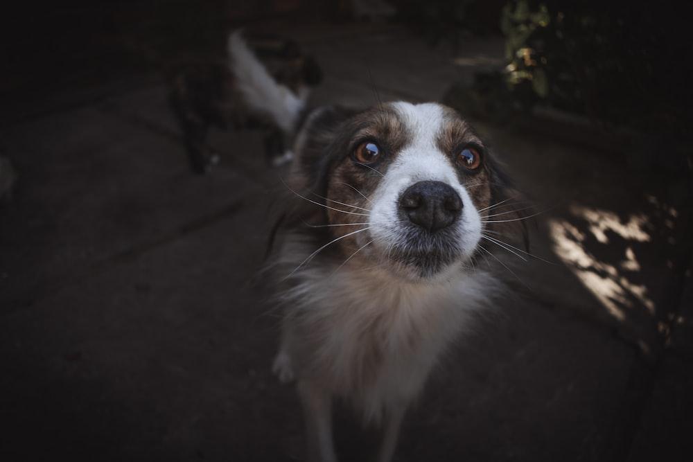 closeup photography of whitedog