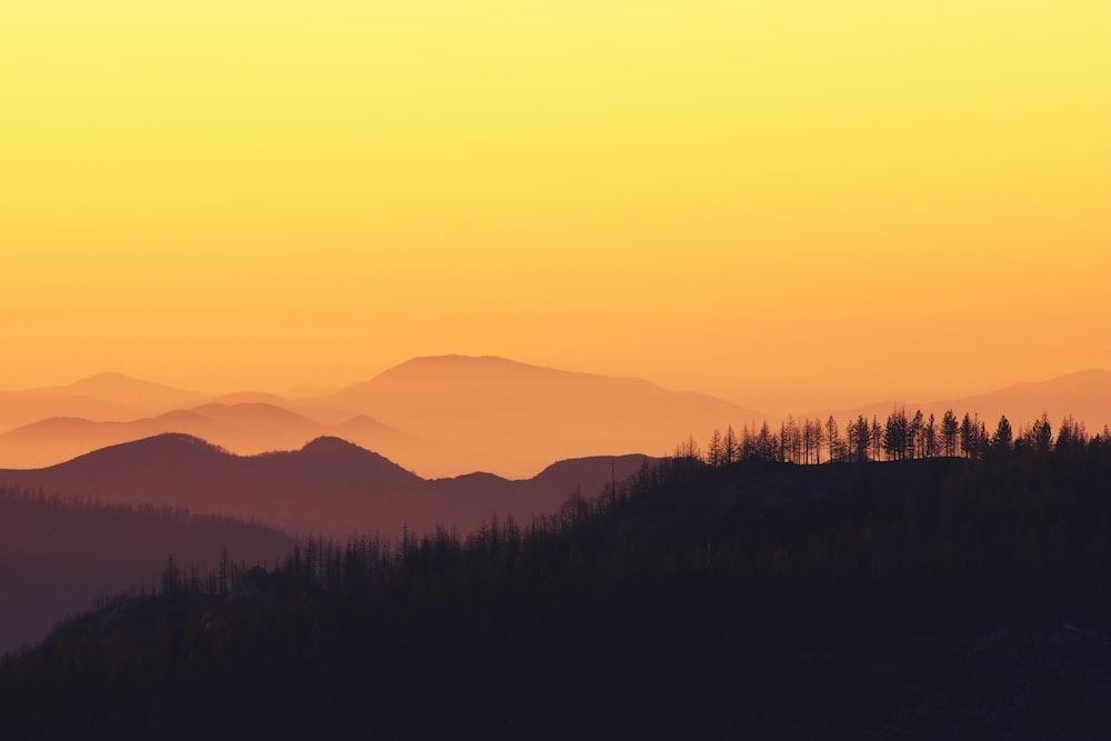 landscape photo of forest during golden hour