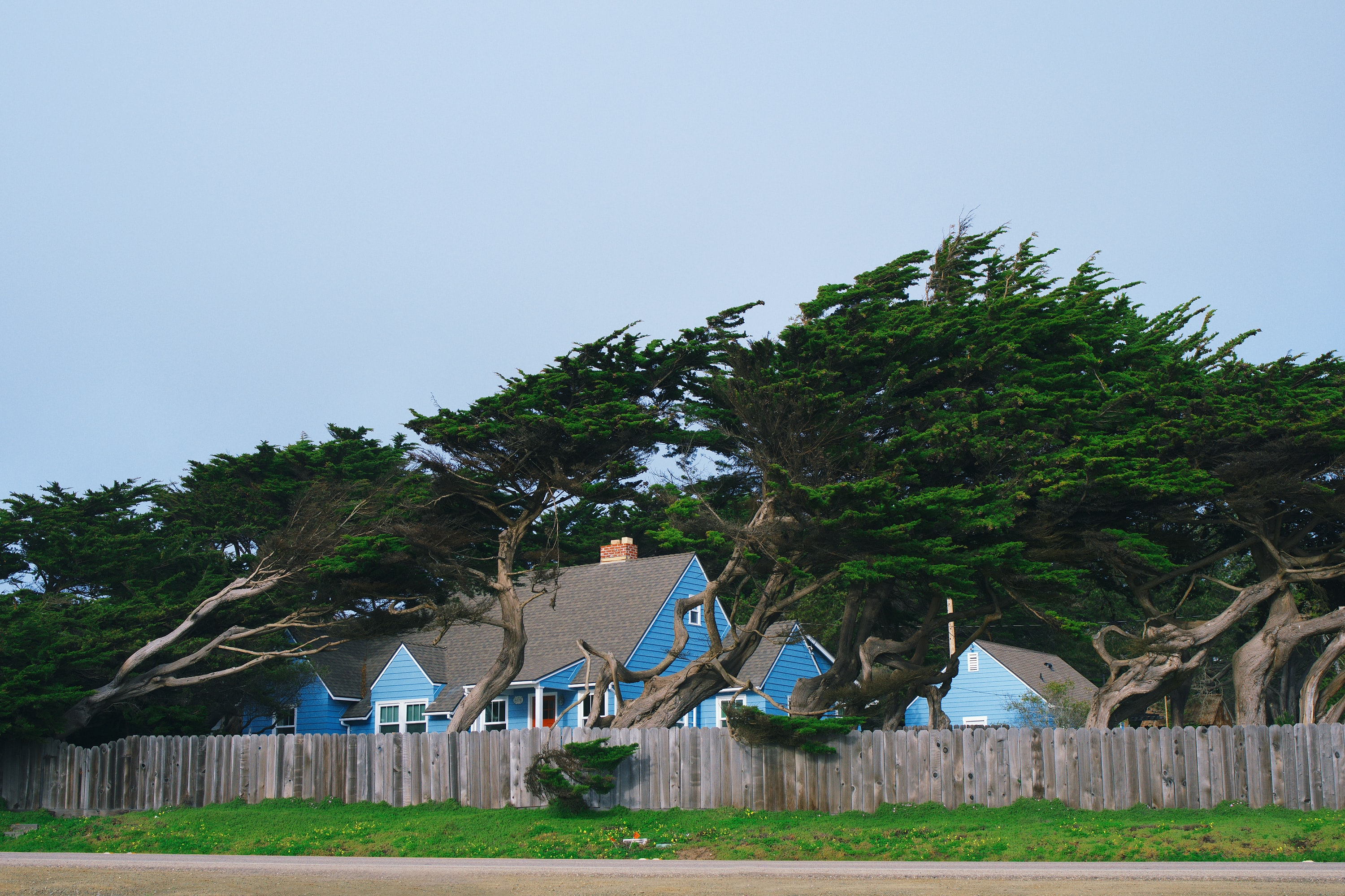 green trees beside blue and gray house during daytime