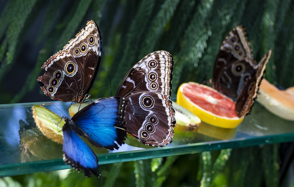 brown and blue butterflies on glass panel