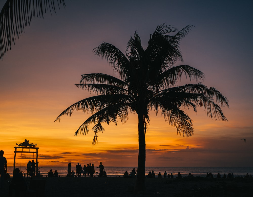 silhouette of palm tree and people on beach
