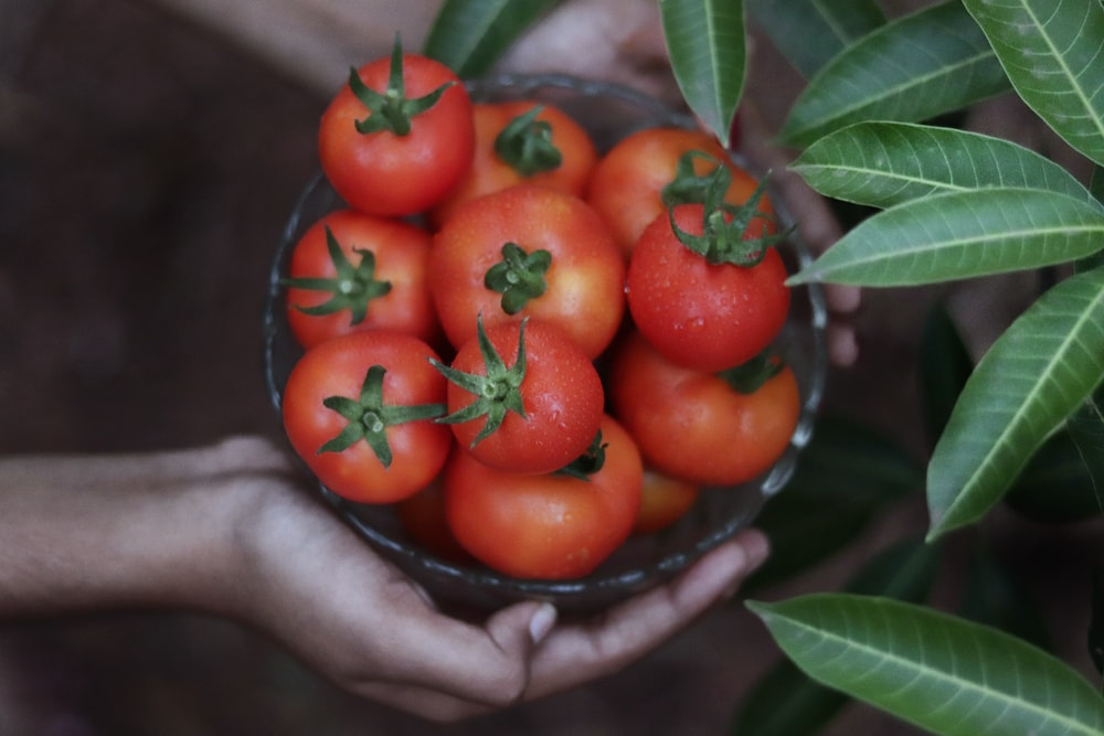 tomatoes on bowl