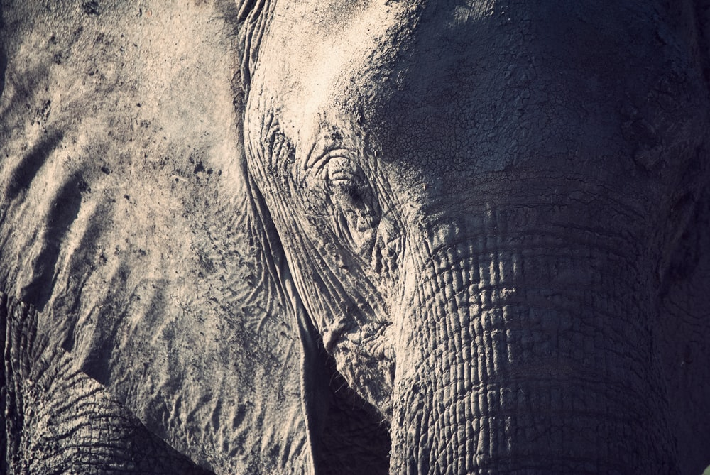 closeup photography of elephant during daytime