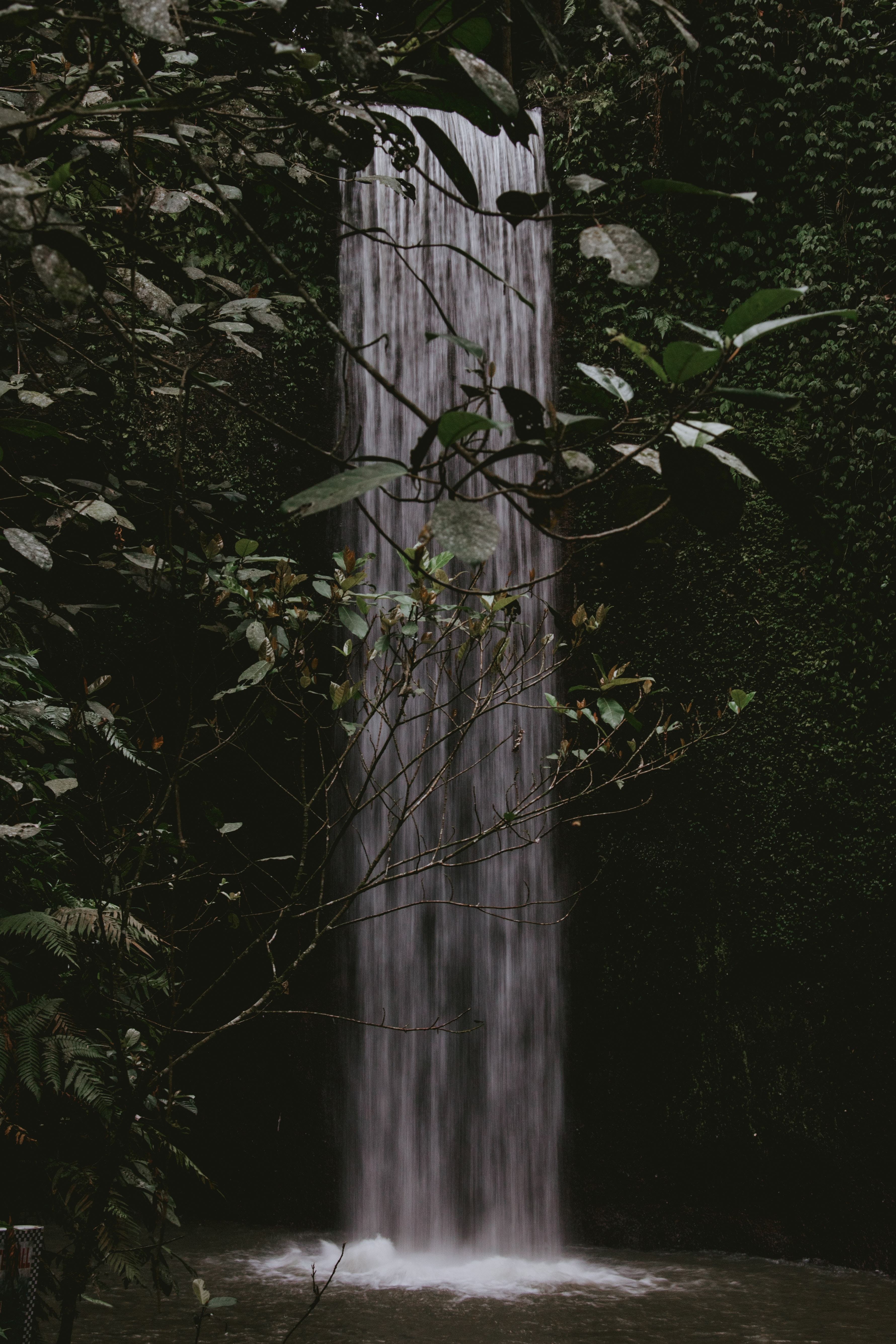 waterfalls in a forest