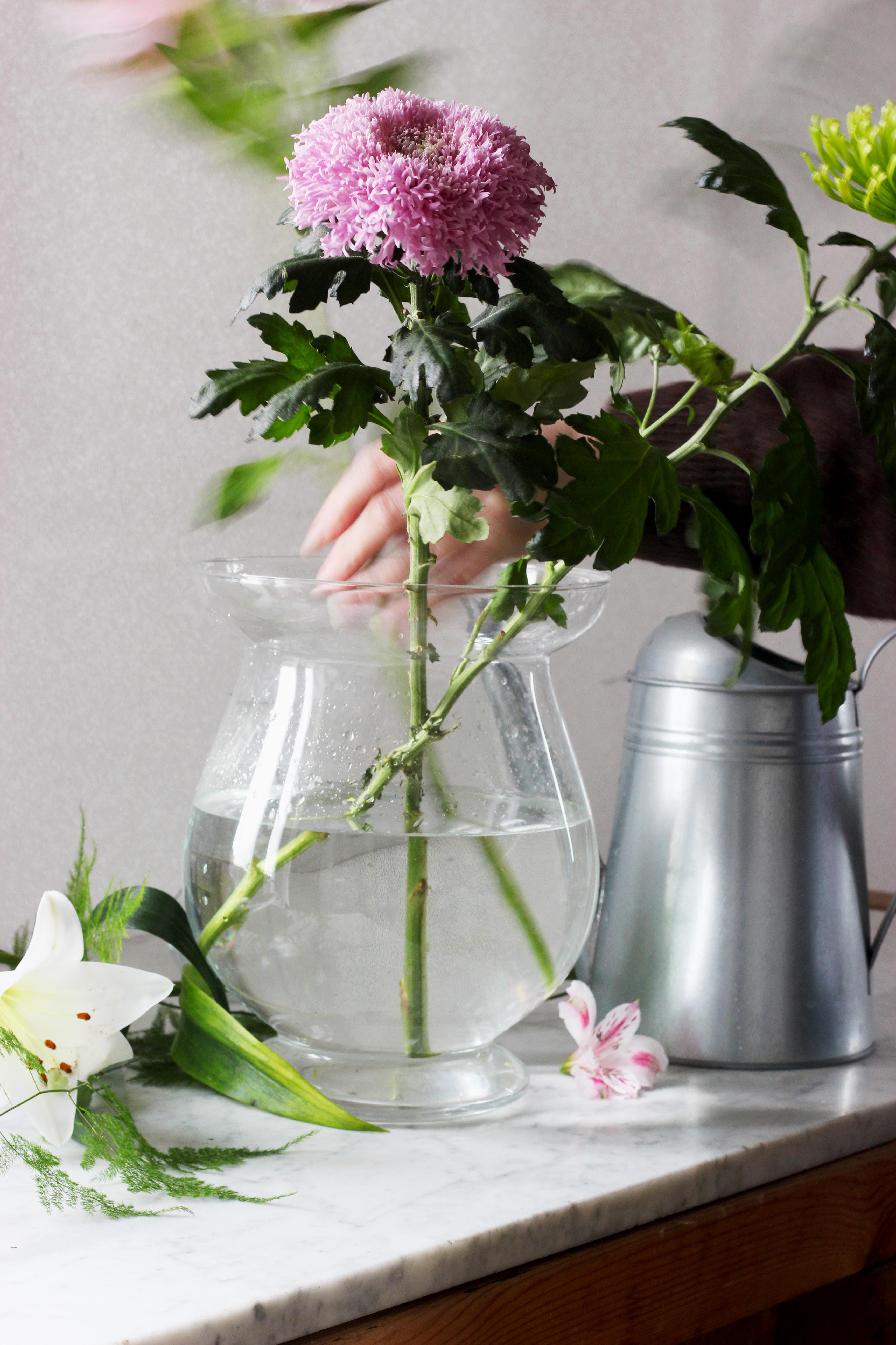 purple carnation flower on glass flower vase