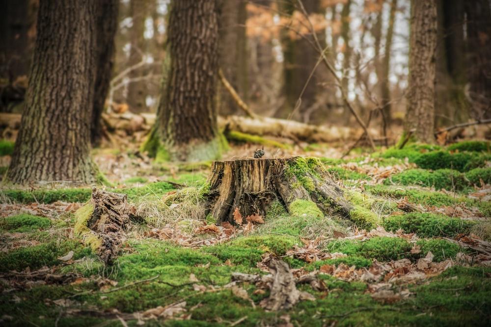 brown wood stump on grass