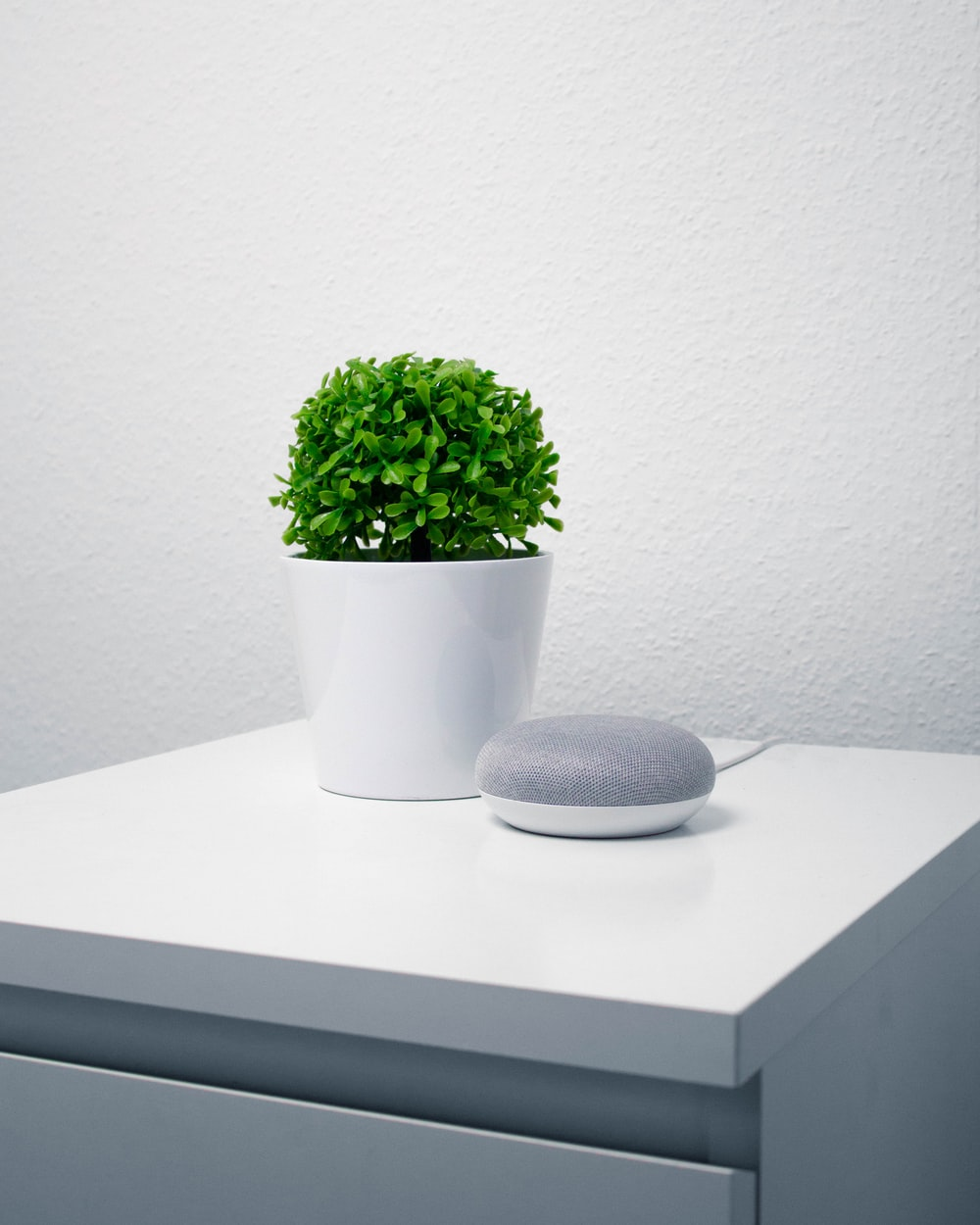 green leafy plant in white vase