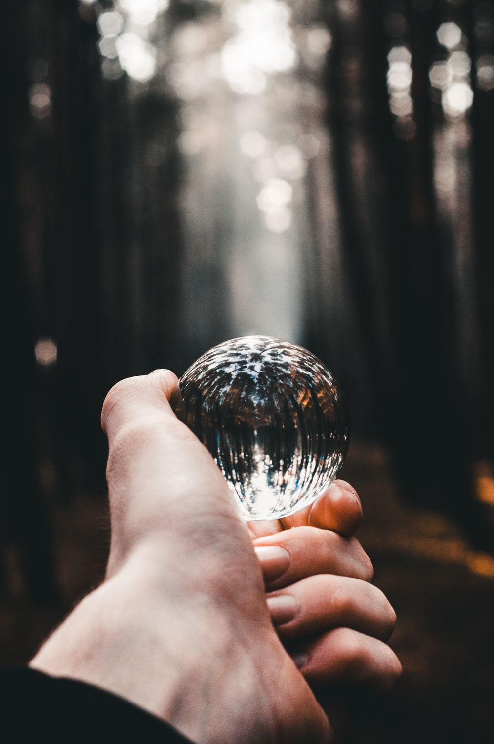 person holding clear glass ball across woods