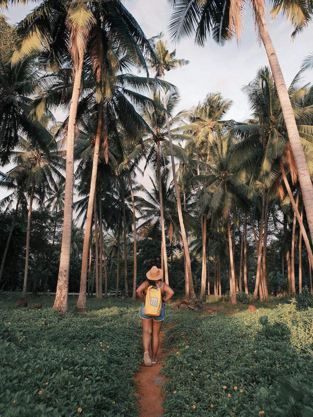 person walking in field near tall palm trees