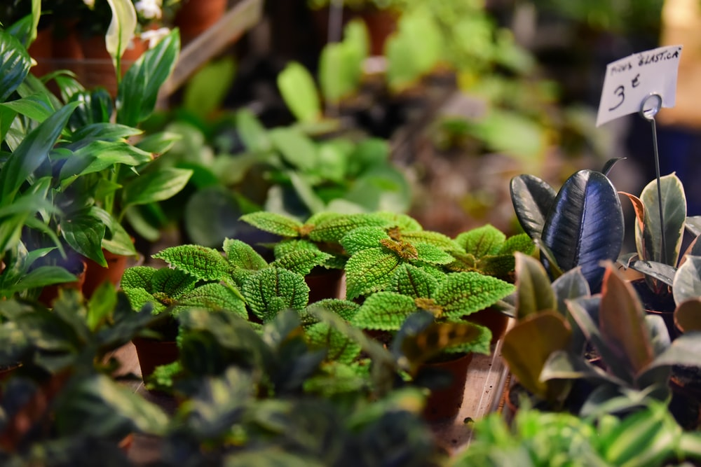 植物の選択的な焦点