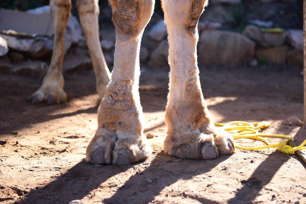 animal foot