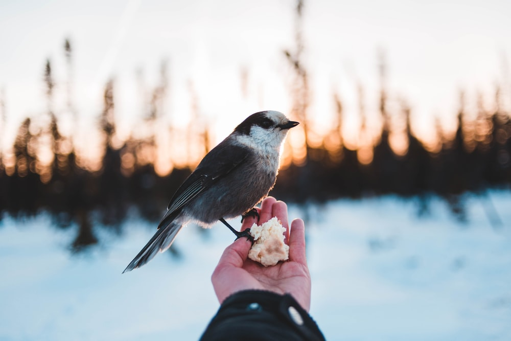 grey and white bird perching on human hand