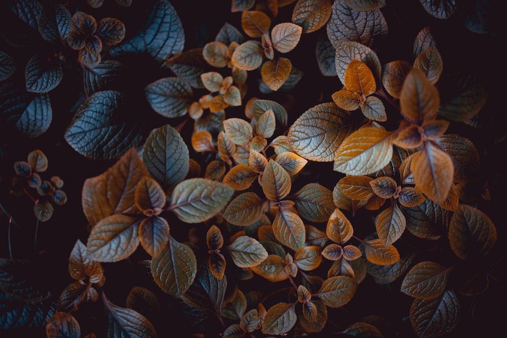 brown-leafed plants