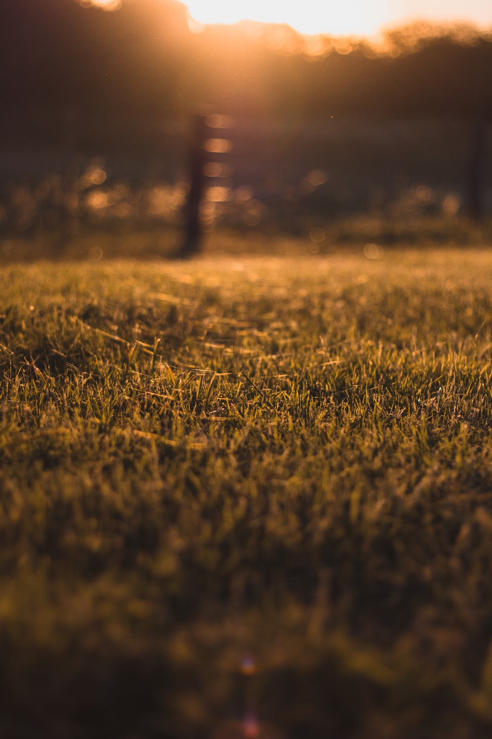 focus photo of green grass