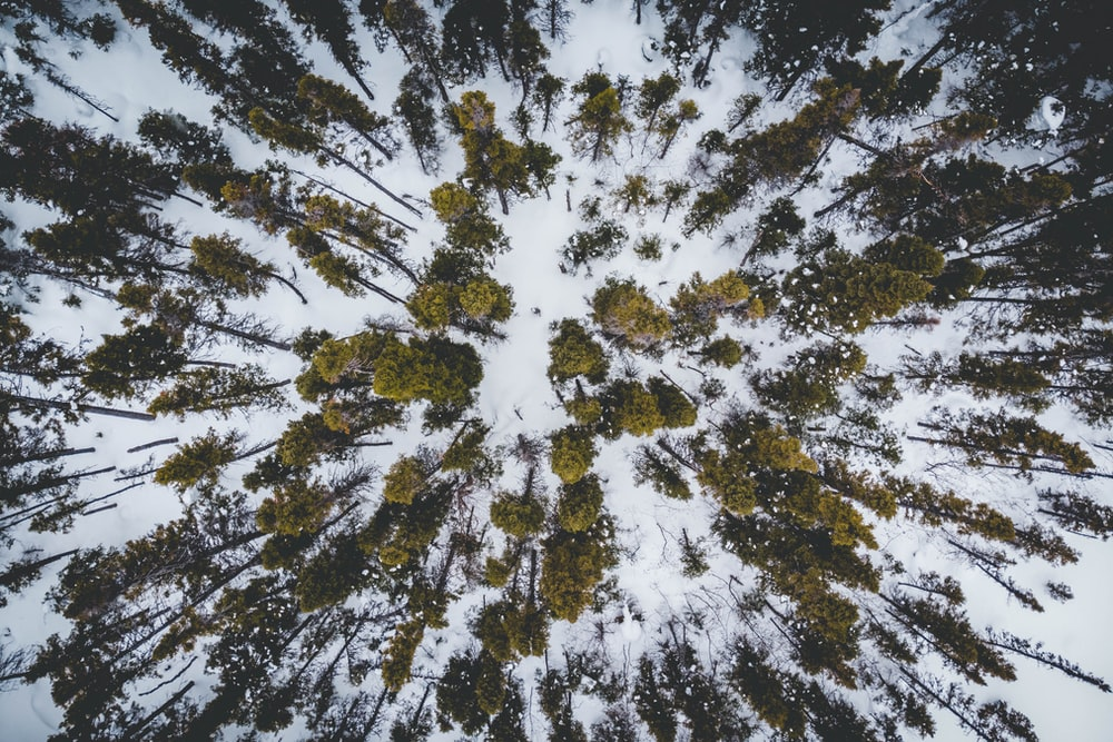 aerial view of green trees on snow-covered ground