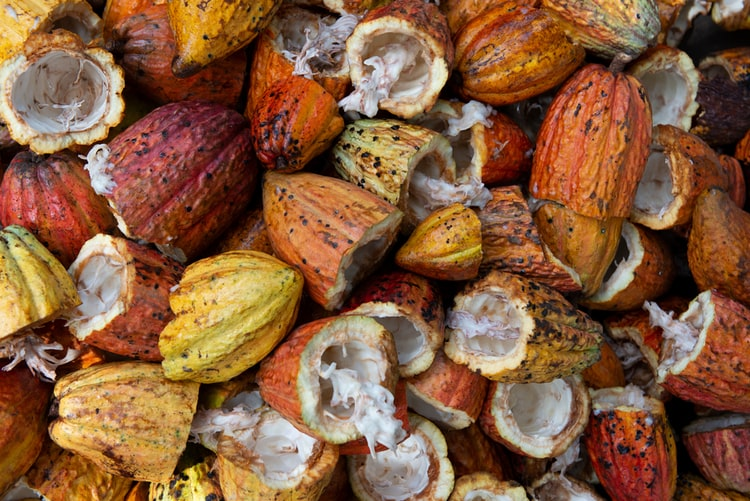 Granos de cacao puro
