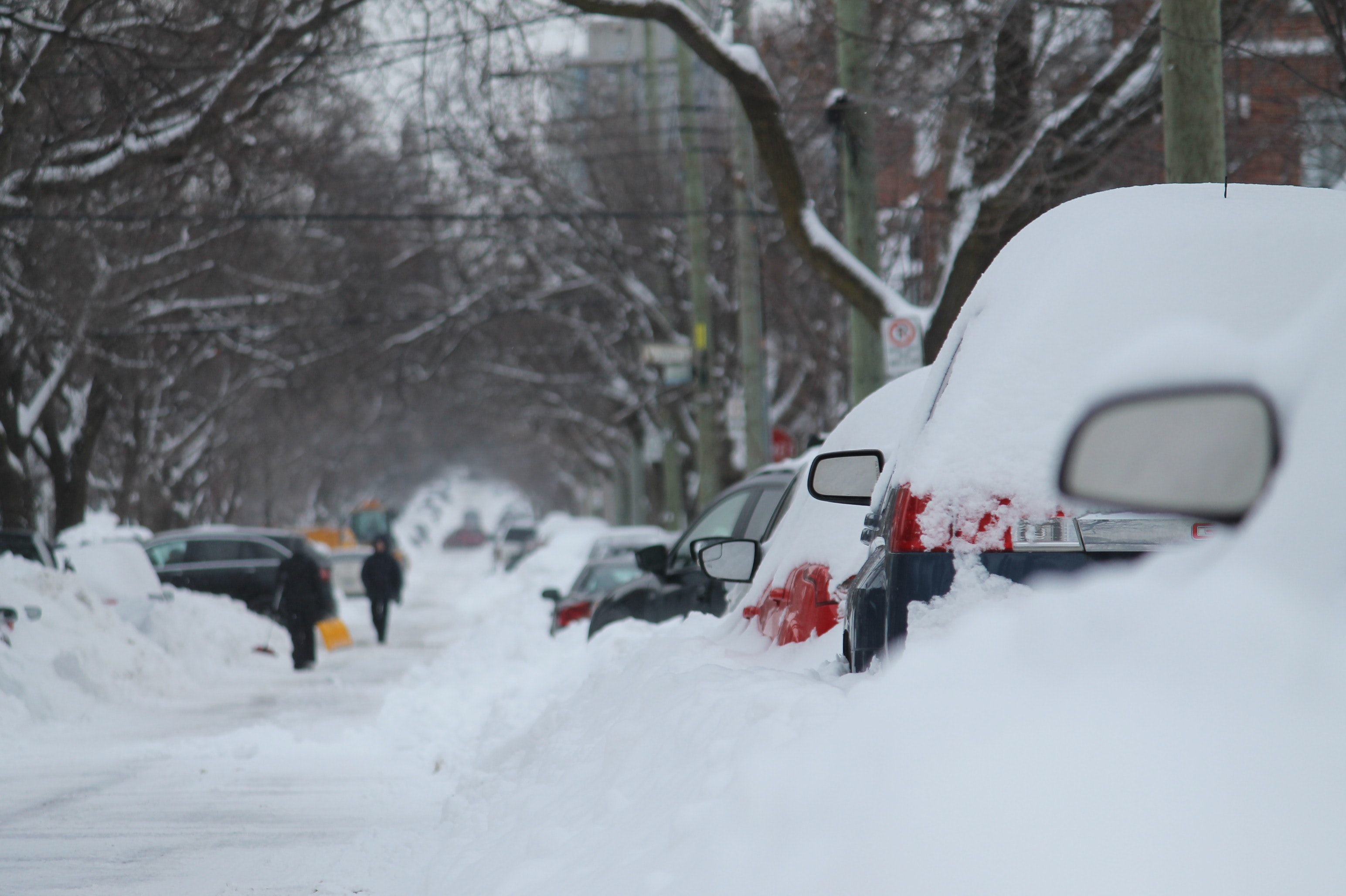 vehicles covered in snow