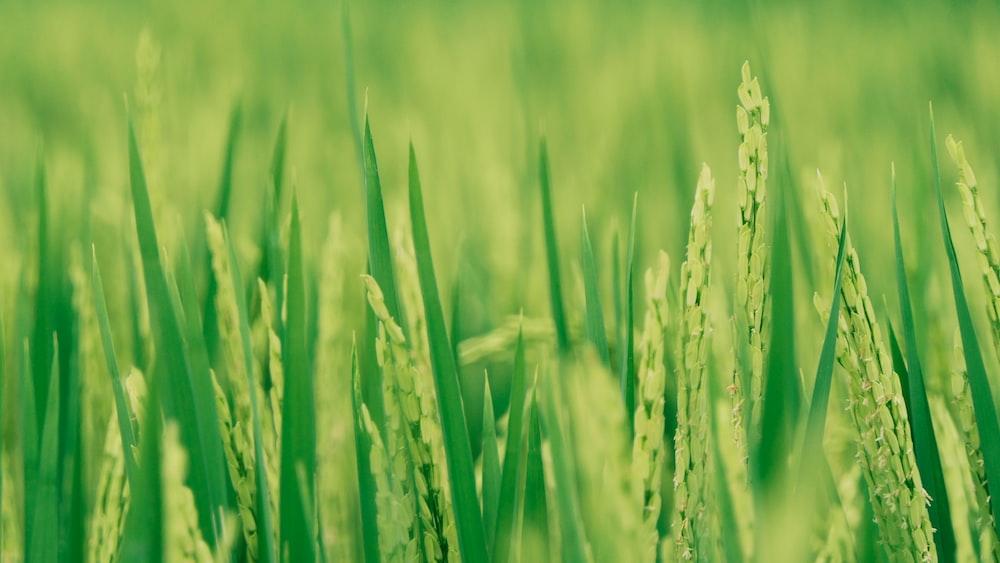 green grass photography