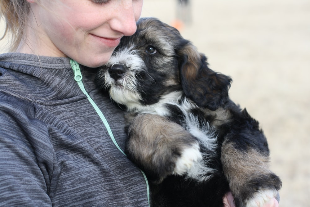 woman holding brown and black puppy
