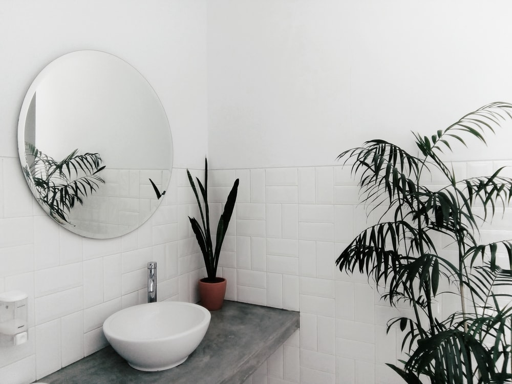 plant beside sink under mirror inside room