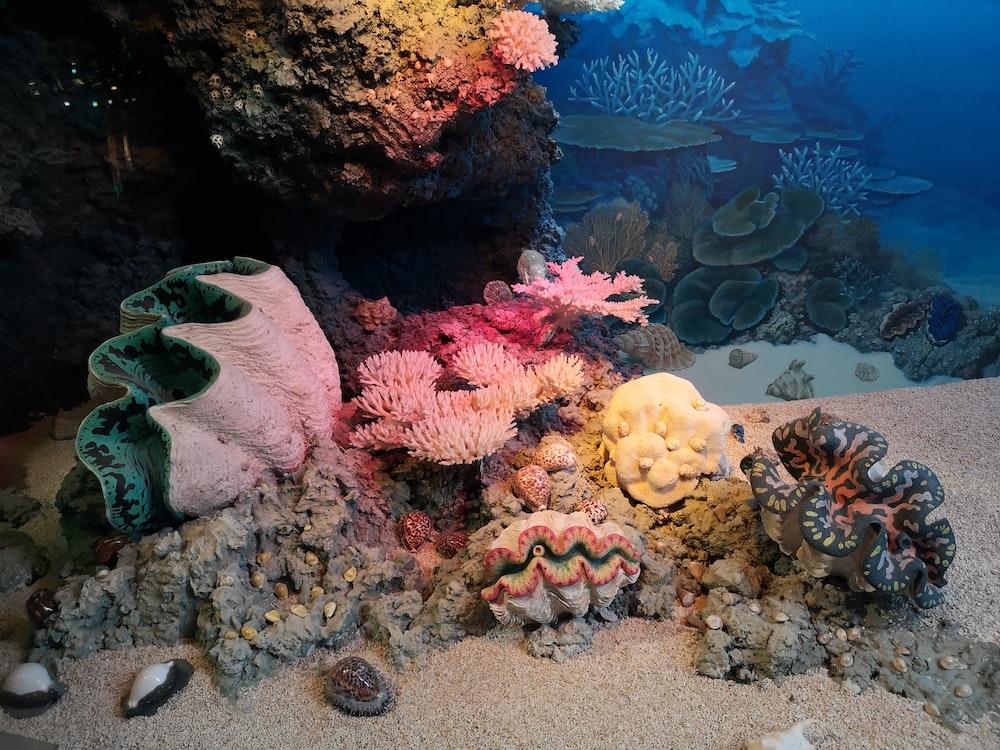 seashells underwater photography