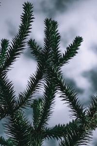 Silhouette plants pt.2